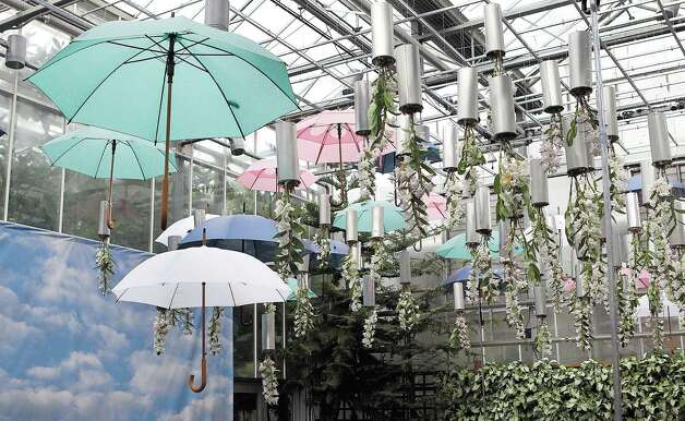 "Bowler hats, umbrellas and upside down Dendrobium Nobiles orchids are features in the Rene Magritte themed Orchid Atrium as part of the Atlanta Botanical Garden's ""Orchid Daze: Surreal Beauty,"" show of fanciful flowers and playful objects, February 8, 2013.  (Phil Skinner/Atlanta Journal-Constitution/MCT) Photo: Phil Skinner, McClatchy-Tribune News Service / Atlanta Journal-Constitution"