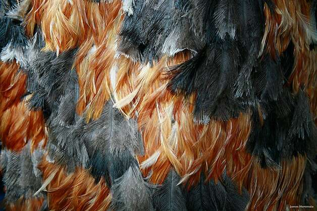 Feather cloaks (korowai) are a symbol of high status in Maori culture, similar to the 'ahu'ula worn by Hawaiian royalty. Gavin Newsom received a korowai while San Francisco mayor when the Yerba Buena Center for the Arts hosted an exhibition of Maori taonga (treasures) in 2005. The National Museum of New Zealand in Wellington, widely known as Te Papa, displays a red and yellow feather cloak given to explorer Captain Cook by Hawaiian chief Kalaniopu'u, while the Bishop Museum in Honolulu boasts one of King Kamehameha the Great's. Photo: James Heremaio