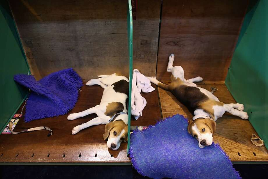 You can lose your mind when canines are two of a kind:They look alike, they sleep alike, at times they 
