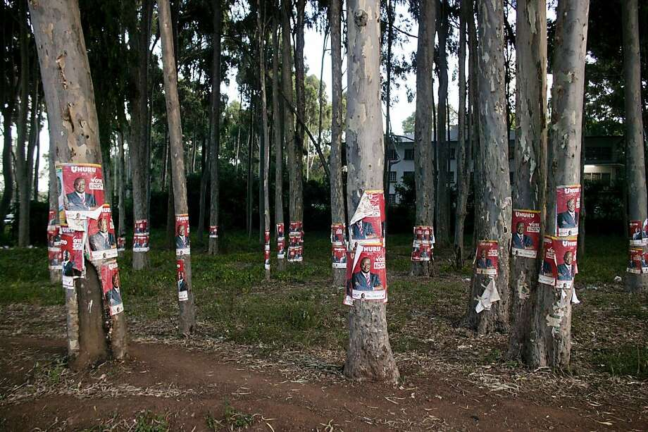 Election posters for presidential hopeful Uhuru Kenyatta dot trees in Nairobi, Kenya. Kenyatta has a small lead over his rival, Raila Odinga, whose allies allege votes have been doctored. Photo: Pete Muller, New York Times