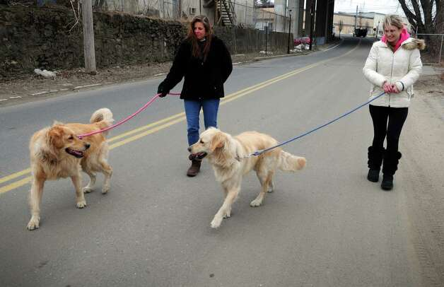 Donna Lucarelli, of Derby, left, and Ashley Ecker, of Milford, walk Labradors Mandy and Maggie Thursday, Mar. 7, 2013 during a break from work at Charter Arms in Shelton, Conn.  The dogs belong to Ecker's father who also works at Charter Arms and brings the dogs to work everyday. Photo: Autumn Driscoll / Connecticut Post