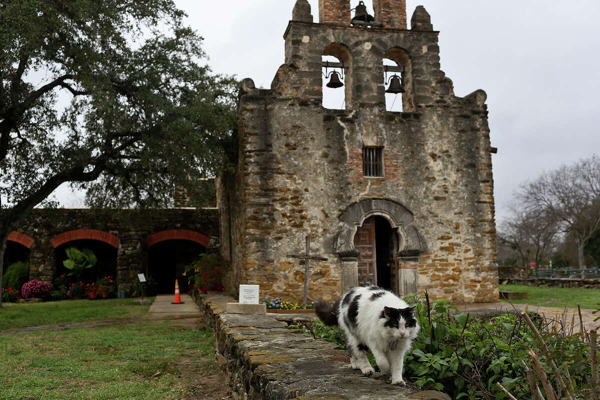 Dominic, one of two resident cats at Mission Espada, walks in front of the chapel on Wednesday, Feb. 20, 2013.
