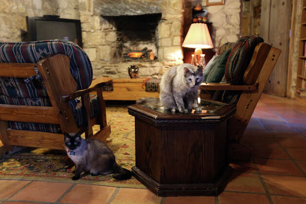 Cappucino, left, and Lily, hang out in the living room of the priest residence at Mission San Juan Capistrano, Tuesday, March 5, 2013. Father Jim Gavin has kept several cats at the mission and they are known to keep the grounds free of rodents and snakes. Photo: Jerry Lara, San Antonio Express-News / © 2013 San Antonio Express-News