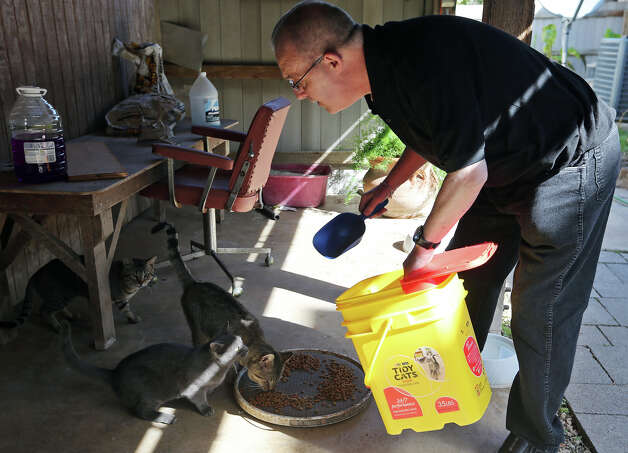 Mission San Juan Capistrano Father Jim Gavin feeds the outdoor cats at the mission, Tuesday, March 5, 2013. Rev. Gavin, who lives on the grounds, keeps three indoor and five outdoor cats that are known to keep the mission free of rodents and snakes. Photo: Jerry Lara, San Antonio Express-News / © 2013 San Antonio Express-News