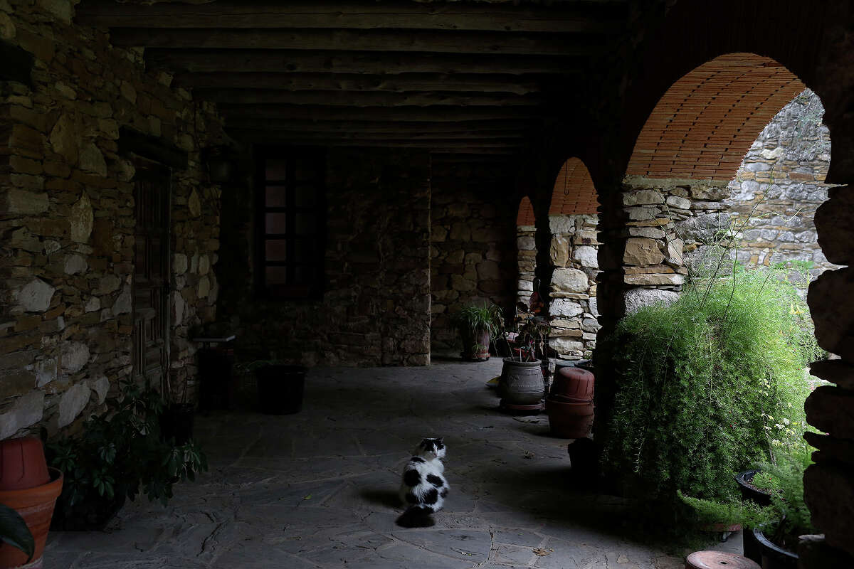 Dominic explores the patio of the offices at Mission Espada on Wednesday, Feb. 20, 2013.