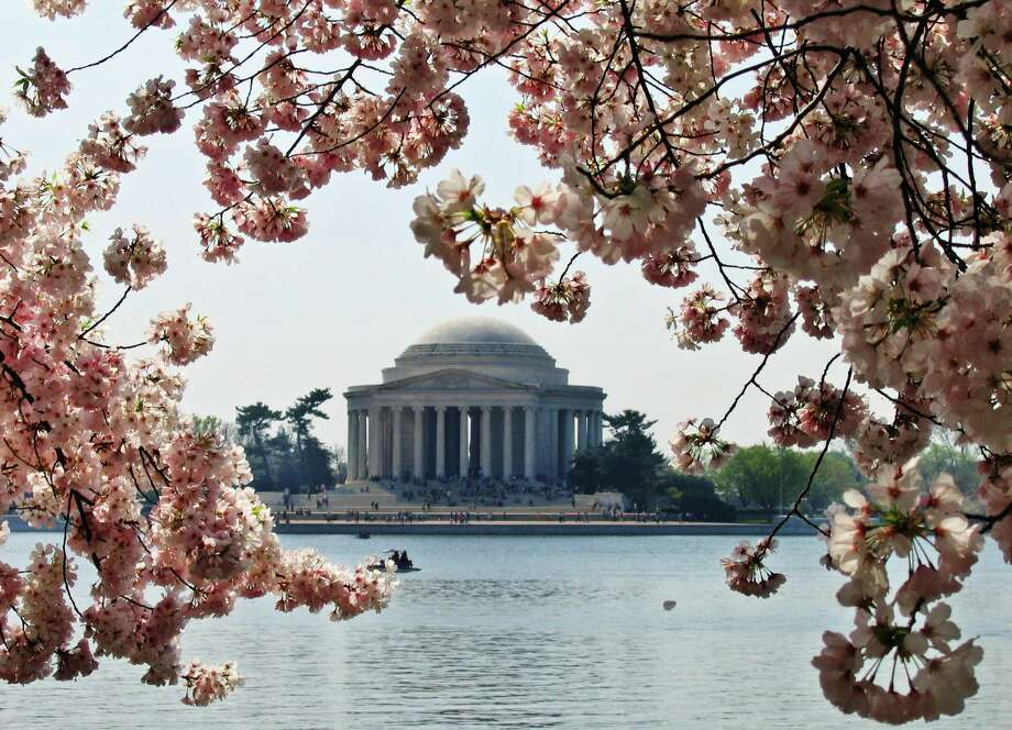 FILE - This March 23, 2012 file photo shows the Jefferson Memorial framed with Japanese Cherry Blossoms along the Tidal Basin in Washington. The bloom season is one of a number around the country this spring celebrating flowers in season.  (AP Photo/Sue Ogrocki, file) Photo: Sue Ogrocki