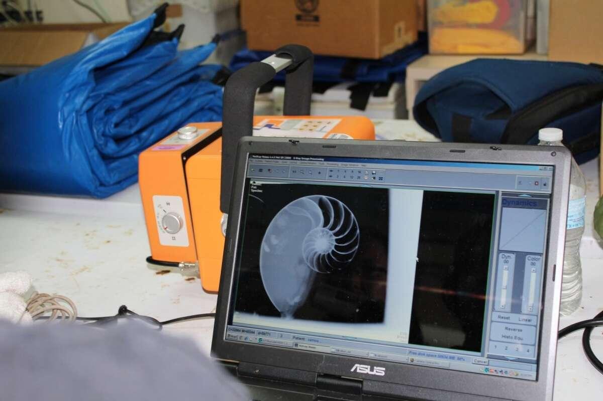 X-ray image of newly caught Samoan nautilus. Peter Ward:
