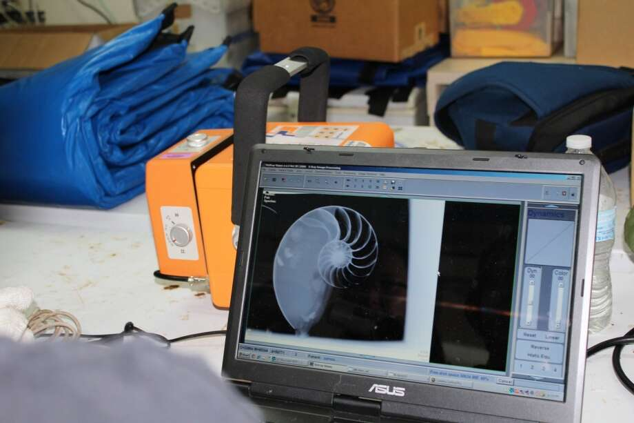 "X-ray image of newly caught Samoan nautilus. Peter Ward: ""I was doing experiments to see if the kidney system in nautilus does in deed hold promise of a breakthrough in treating osteoporosis in humans."""