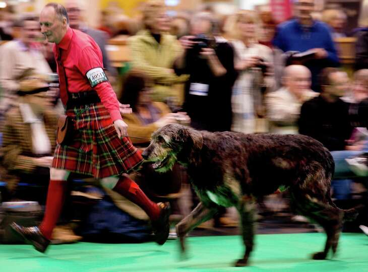 A handler wearing a kilt shows his Irish Wolf Hound during the first day of the Crufts dog show in B