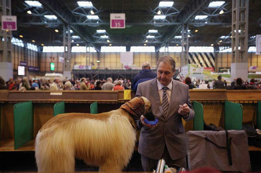 A man gives his Afghan hound a drink after being shown on the first day of Crufts dog show at the NE