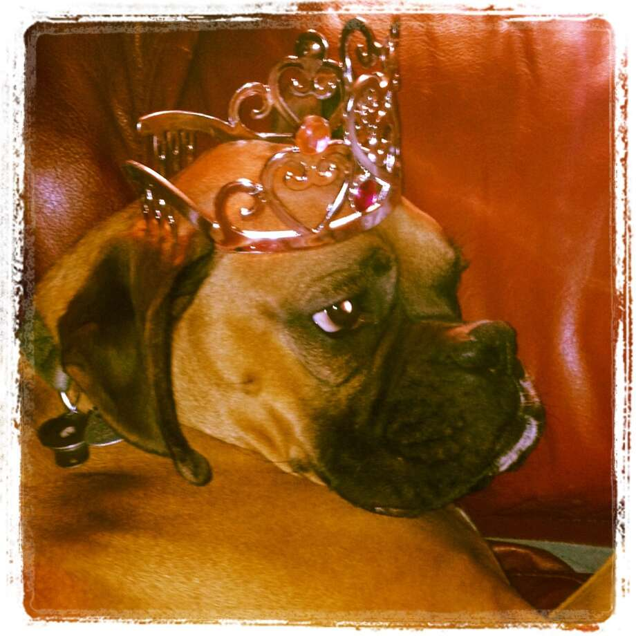 Reggie, who is almost 4 years old, looks quite royal. He dotes on his 2.5 year old ?sister,? Juliana, the daughter of Kelly Stuto of Loudonville.(Kelly Stuto)