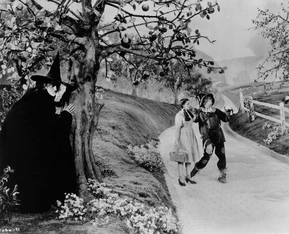 Margaret Hamilton, as The Wicked Witch of the West, hides behind a tree from Dorothy, played by Judy Garland, and the scarecrow as they make their way down the yellow brick road. Photo: Hulton Archive, Getty Images / Moviepix