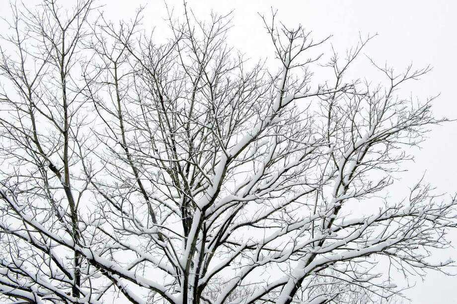 Snow weighs on branches in Stamford on Friday, March 8, 2013. Photo: Lindsay Perry / Stamford Advocate