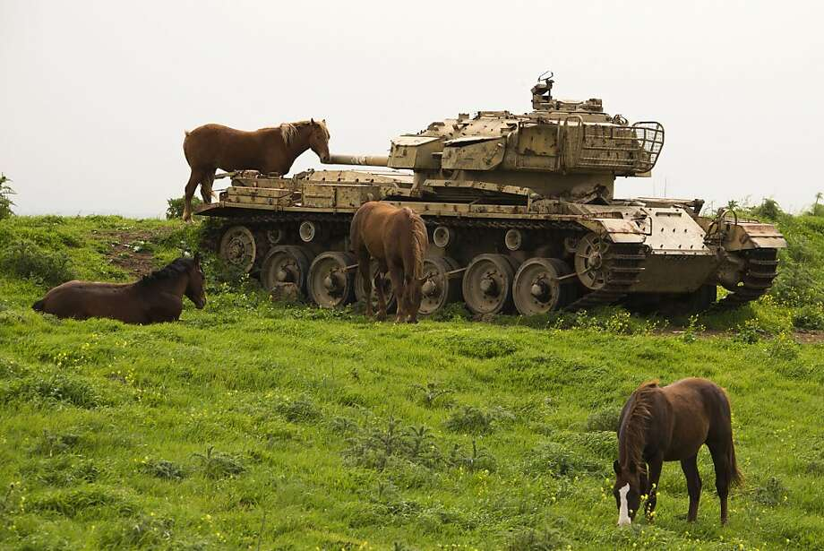 Don't even think about putting us in your hamburger, food companies:The horses in Israel's Golan Heights won't hesitate to defend themselves. Photo: Jack Guez, AFP/Getty Images