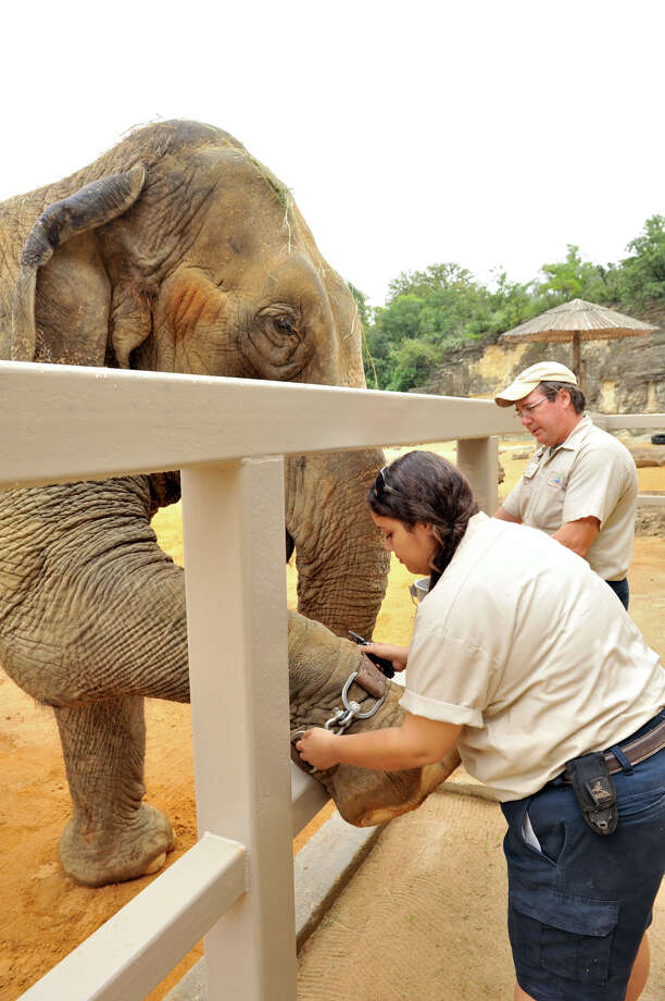 Nydia Gray, left, and Michael Huff work with San Antonio zoo elephant 