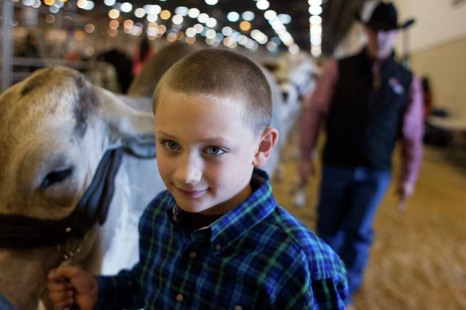 With his father, Jim, in tow J.D. Sartwelle, 8, walked his Brahman heifer named Sugie to participate in the Junior Breeding Beef Heifer Show. Photo: Johnny Hanson, Houston Chronicle / © 2013  Houston Chronicle
