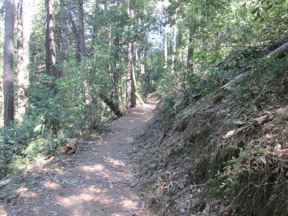 Trail starts by meandering down through shaded forest