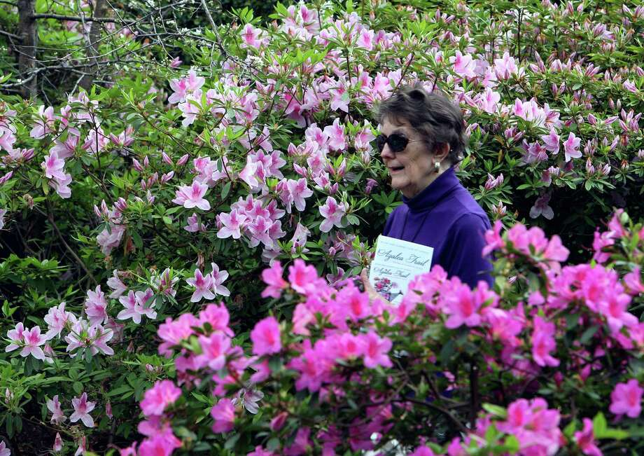Joyce Flott tours the Bayou Bend Gardens during the River Oaks Garden Club 78th Annual Azalea Trail Saturday, March 9, 2013, in Houston. Photo: James Nielsen, Houston Chronicle / © 2013  Houston Chronicle