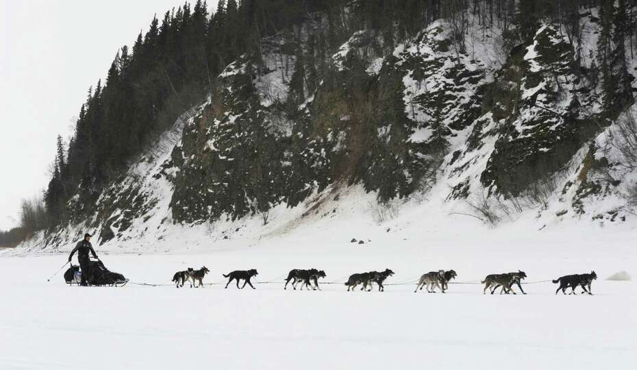 Musher Ken Anderson drives his team up the Yukon River as he nears the Iditarod checkpoint in  Anvik