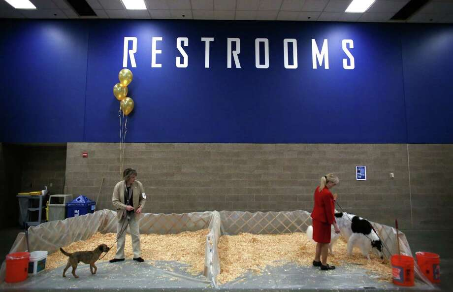 Dogs sniff around the pup restroom during the Seattle Kennel Club's Dog Show at CenturyLink Field Events Center. The show features nearly 2,000 dogs and their owners competing for Best in Show awards. Photographed on Saturday, March 9, 2013. Photo: JOSHUA TRUJILLO / SEATTLEPI.COM