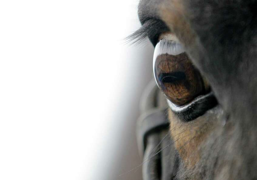 An old horse's eye seen at the Belgrade hippodrome, Serbia, Thursday. It's owner Maja Matic, a forme