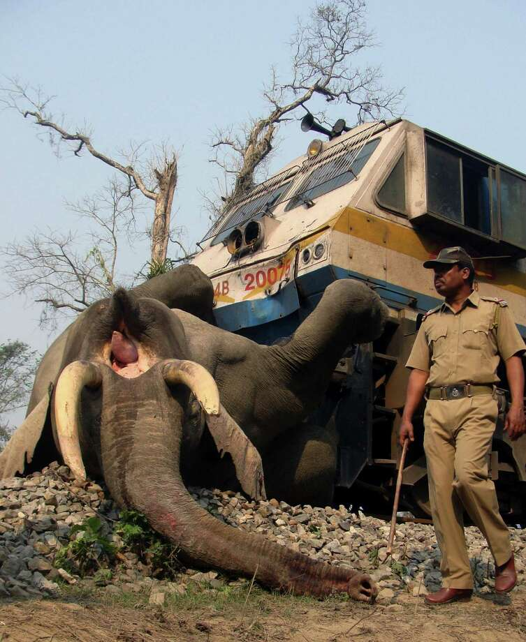 An Indian forest guard walks past the body of an elephant that was killed after being hit by a speeding train at the Buxa Tiger Reserve, near Alipurduar in West Bengal state, India, Tuesday. Photo: AP