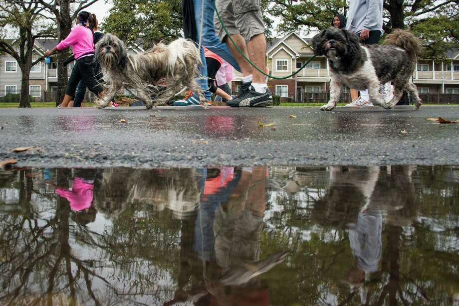 A pair of dogs join walkers along Allen Parkway. Photo: Smiley N. Pool, Houston Chronicle / © 2013  Houston Chronicle