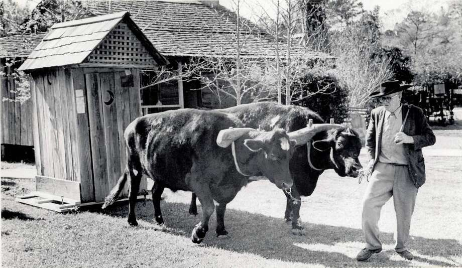 Jethro Holmes of Woodville charmed his twin oxen Tom and Jerry into skidding a special cargo into the launch area for airlift to Nederland during the 1976 Heritage Festival. Photo: Archive Photo