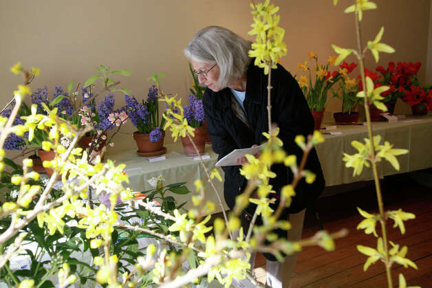 Abbie Moynihan studies a quince branch at the NGC Small Standard Flower Show at the Pinkney Museum in Rowayton, Conn. on Sunday, March 10, 2013. The Rowayton Gardeners presented the show with arrangements inspired by the Rowayton Historical Society. Photo: BK Angeletti, B.K. Angeletti / Connecticut Post freelance B.K. Angeletti