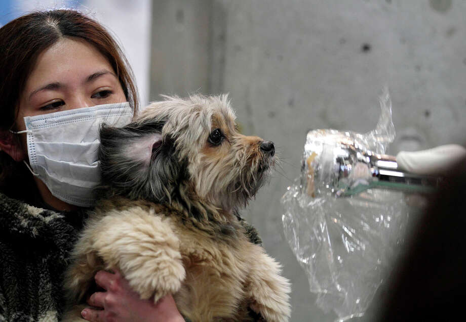 A woman holds her dog as they are scanned for radiation at a temporary scanning center for residents living close to the quake-damaged Fukushima Dai-ichi nuclear power plant Wednesday, March 16, 2011, in Koriyama, Fukushima Prefecture, Japan. Photo: Gregory Bull, AP / 2011 AP