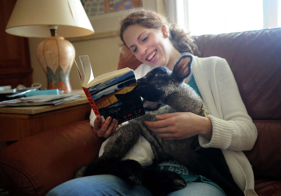 Sophia Tramuta, 16 of Milford, laughs as lamb Chihiro nibbles on her book at her home on Sunday, March 10, 2013. Tramuta, a student at Trumbull High School's Agriscience Center, is raising the lamb at home, after it was rejected by it's mother. Photo: Brian A. Pounds / Connecticut Post