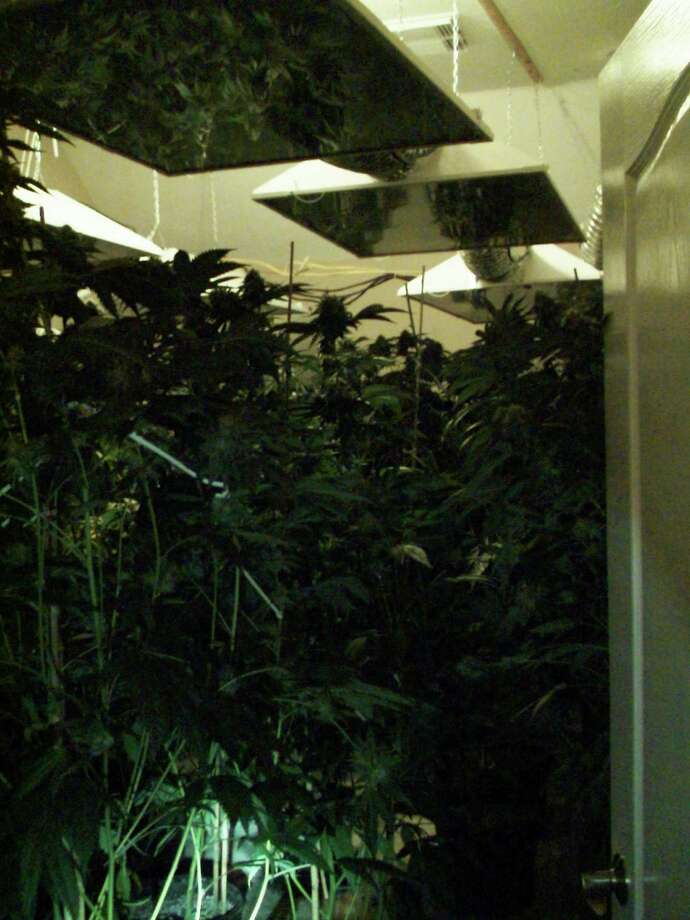 A grow house was found after neighbors reported the strong odor of marijuana coming from a house on Catamaran Cove Drive in Pearland. Photo: Pearland PD