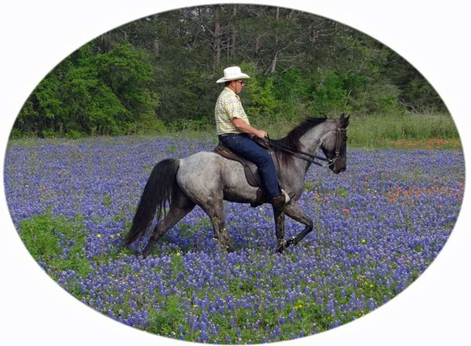 "Huey Conn riding Tennessee walking horse ""Lucas"" in the bluebonnets on the Jacobs Cattle Ranch in Brenham. (Laura Kidder/Reader submission) Photo: Reader Photo"