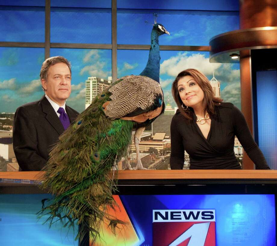 WOAI's fun-and-games news promos, such as the one that starred Randy Beamer, Elsa Ramon and an aggressive NBC peacock, are being replaced by a more serious approach. Photo: WOAI