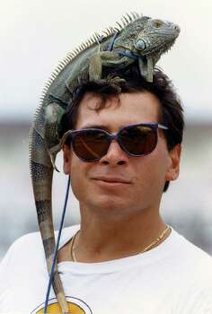 Galvestonian Trey Zimmerman with his iguana Iggy along the seawall watching for girls Sunday. March 17, 1991. Photo: Gaylon Wampler, Houston Chronicle