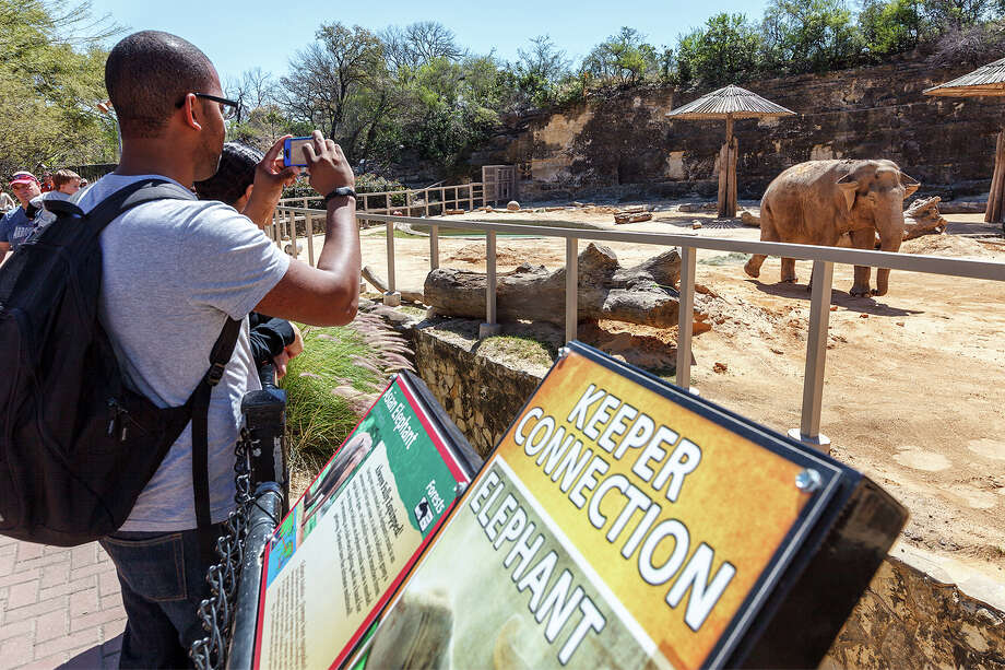 James Varlack, from Midland, Texas, takes a photo of Lucky, the San Antonio Zoo's remaining Asian elephant, at the San Antonio Zoo on  March 11, 2013.  Boo, a 59-year-old Asian elephant, was euthanized a day earlier after zoo officials determined her quality of life was gone.  Photo: MARVIN PFEIFFER, Marvin Pfeiffer/ Express-News / Express-News 2013
