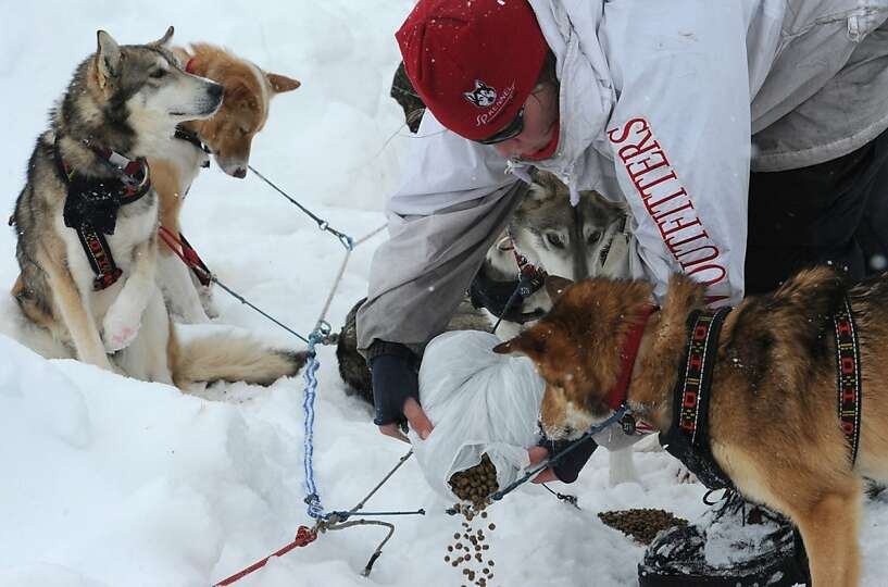 Aliy Zirkle feeds her dogs in Unalakleet on  Sunday, March 10, 2013, during the Iditarod Trail Sled