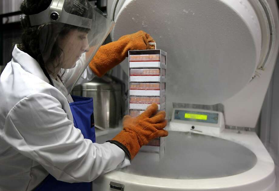 Jessica McFadden of Child Health and Development Studies holds a rack of blood samples from a project dating to 1959. Photo: Paul Chinn, The Chronicle