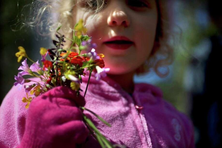 """Teahen Clifford, 3, walks with wild flowers she picked while on a hike at the Houston Arboretum & Nature Center Monday, March 11, 2013, in Houston. """"I don't think they are supposed to take the flowers, but oh well,"""" laughed their father Dennis. """"We come here all of the time."""" The family of five went on a hike to start their spring break. Photo: Johnny Hanson, Houston Chronicle / © 2013  Houston Chronicle"""