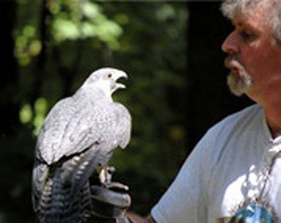 A program about birds of prey and their rehabilitation will be presented Saturday by Horizon Wings Raptor Rehabilitation Center at the Pequot Library in conjunction with Fairfield's One Book, One Town reading initiative. Photo: Contributed Photo / Fairfield Citizen contributed