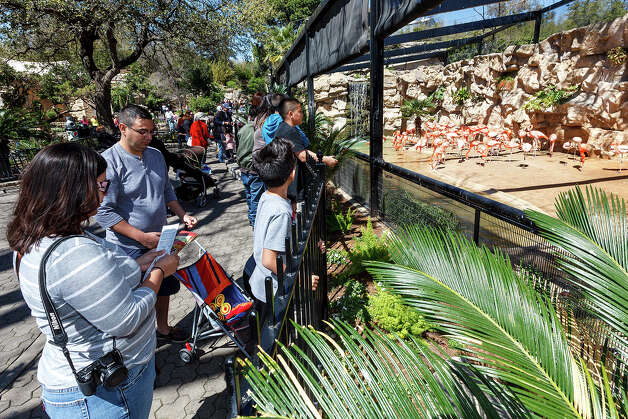The San Antonio Zoo was the destination of choice for many on a beautiful day during spring break on Monday, March 11, 2013.  Photo: MARVIN PFEIFFER, Marvin Pfeiffer/ Express-News / Express-News 2013