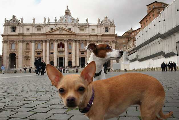 Dogs run around St Peter's Square on March 11, 2013 in Vatican City, Vatican. Cardinals are set to enter the conclave to elect a successor to Pope Benedict XVI after he became the first pope in 600 years to resign from the role. The conclave is scheduled to start on March 12 inside the Sistine Chapel and will be attended by 115 cardinals as they vote to select the 266th Pope of the Catholic Church. Photo: Dan Kitwood, Getty Images