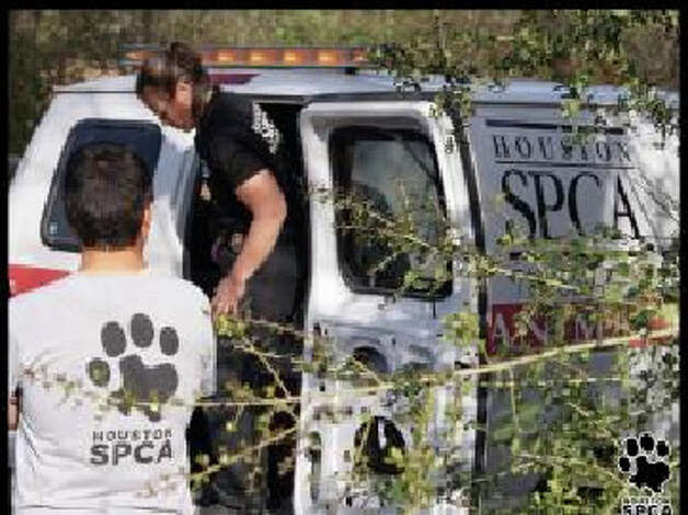 Forty-one animals were rescued by the Newton County Sheriff's Office and the Houston SPCA Thursday. Photo: Houston SPCA