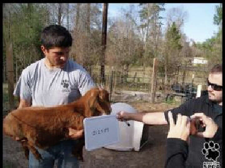 Forty-one animals were rescued by the Newton County Sheriff's Office and the Houston SPCA Thursday.