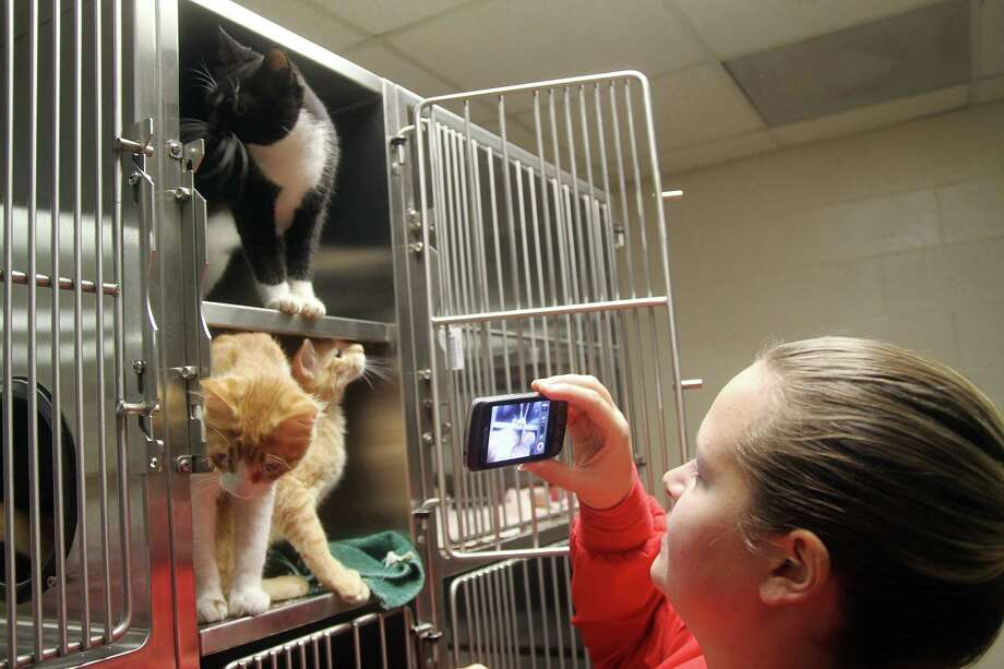 Samantha Haughton, kennel tech with Pearland Animal Control, makes a YouTube video with some of the cats.Samantha Haughton, kennel tech with Pearland Animal Control, makes a YouTube video with some of the cats. Photo: Pin Lim, Freelance / Copyright Pin Lim.