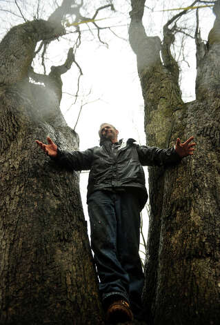 Former Easton tree warden Rich McLaughlin stands in the crotch of a white oak tree that he is trying to save from town removal on Glovers Lane in Easton on Tuesday, March 12, 2013. Photo: Brian A. Pounds / Connecticut Post