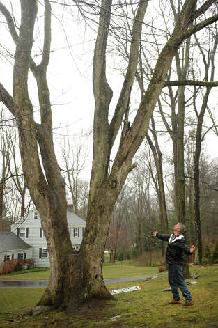 Former Easton tree warden Rich McLaughlin stands by the white oak tree that he is trying to save from town removal on Glovers Lane in Easton on Tuesday, March 12, 2013. Photo: Brian A. Pounds / Connecticut Post
