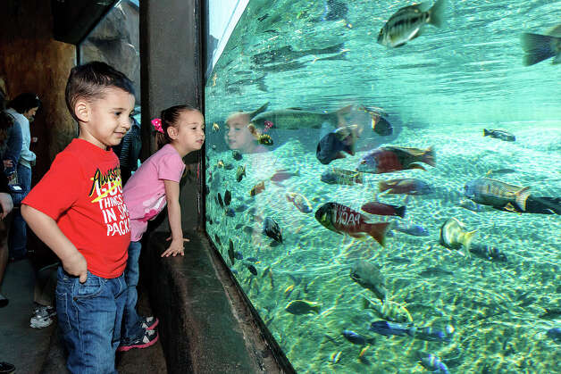 Gavin Metcalf (3) and his sister Avery Metcalf (6) from Denton, Texas, enjoy an underwater viewing window in the Africa Live! exhibit while visiting the San Antonio Zoo for spring break on Monday, March 11, 2013. Photo: MARVIN PFEIFFER, Marvin Pfeiffer/ Express-News / Express-News 2013