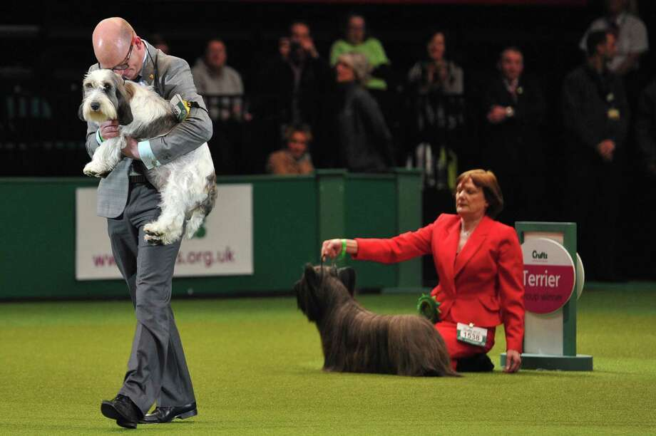 "Gavin Robertson and Jilly, a Basset Griffon Vendeen, celebrate winning the Best in Show category at the Crufts Dog Show in Birmingham, in central England on March 10, 2013. The annual event sees dog breeders from around the world compete in a number of competitions with one dog going on to win the ""Best in Show"" category. Photo: CARL COURT, AFP/Getty Images / AFP"