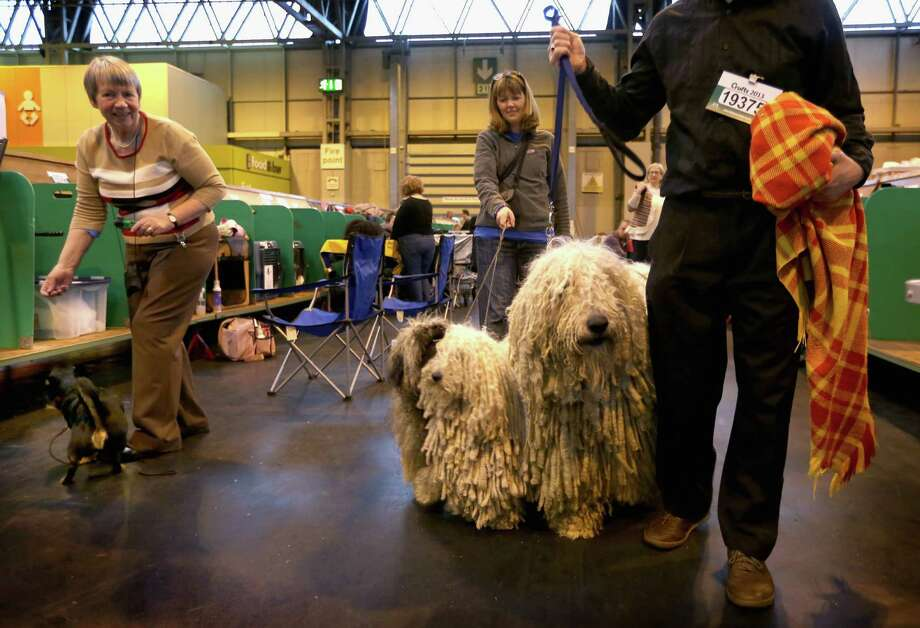 Peggy and Furge, Hungarian Puli and Agatha, a Hungarian Komondor with their owners Isobel and Kim Sears get ready to show during the final day at Crufts Dog Show on March 10, 2013 in Birmingham, England. During this year's four-day competition over 22,000 dogs and their owners will vie for a variety of accolades but ultimately seeking the coveted 'Best In Show'. Photo: Rosie Hallam, Getty Images / 2013 Getty Images